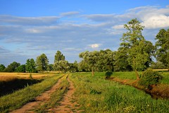 early summer (JoannaRB2009) Tags: summer path fields road trees landscape view nature dolinaneru grabadrzychowska sky blue clouds dzkie lodzkie polska poland