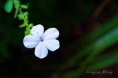 Florzinha (megalia2) Tags: florzinha flor natureza delicada cute fofa linda