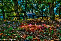 Hdr Autumn (Davide Fregosi) Tags: hdr nikon d5200 tamron1750 santuario di roverano italia italy liguria la spezia borghetto vara autunno