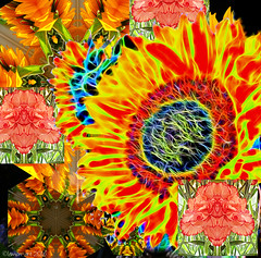 Autumn Equinox Sunflower Fantasy (Lemon~art) Tags: flowers kaleidoscope faces blackbackground sunflower equinox vernalequinox autumnequinox halfdayhalfnight fall season flora fun