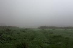 Foggy (Katarzyna Knych) Tags: fog foggy mist fields green poland melancholy