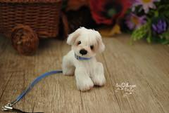 rex06 (Zhanna Zolotina) Tags: miniature dog ooak handmade toyzz tinydolhousetoyzz altair teddy bear dollhouse puppenhaus blythe