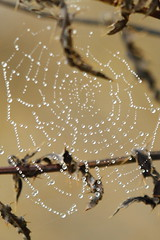 Hanging Jewels_2336 (WendyCoops224) Tags: water canon eos spider droplets web drop drip jewels damp glisten 600d 10040mml