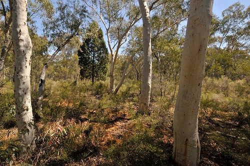 Pilliga Forest by lockthegate, on Flickr