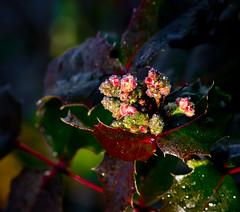 Thank you for the Sun light. (Omygodtom) Tags: park red macro green art garden nikon bokeh tamron grape sparkel