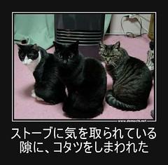 ストーブに気を取られている隙に、コタツをしまわれた #猫 #コタツ #炬燵 (Demochi.Net) Tags: life cute sexy japan fun japanese motivator culture 日本 ペット 猫 demotivator 金 家族 結婚 ゲイ 女 子供 おっぱい 愛犬 政治 社会 巨乳 文化 眼鏡 教育 demotivators 経済 女性 初恋 r18 女子 カップル 子猫 女装 お笑い motivators 会社 少子化 企業 ユーモア 恋 悪い 格差 風刺 一言 デモチ 大喜利