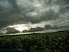 Sky Lighting (Shamim omi) Tags: light cloud sun field river nikon outdoor side s3000 sugercane natore sx40 lanescape ishurdi