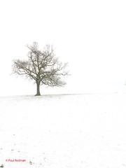 Lone Tree, Castle Cary, Somerset (predman69) Tags: brown white snow branches somerset lonetree castlecary elementsorganizer