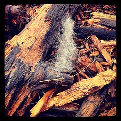 #tronco #legno #lana #ciuffodilana #bosco #pezzidilegno #wood #pieceofwood #wool #winter #inverno (bluYK52) Tags: wood winter lana wool square squareformat tronco inverno legno bosco pieceofwood pezzidilegno iphoneography instagramapp xproii uploaded:by=instagram ciuffodilana