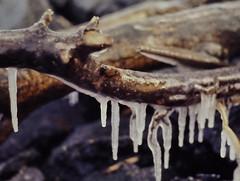 dutch winter (2) (bertknot) Tags: winter dutchwinter dewinter winterinholland winterinthenetherlands hollandsewinter winterinnederlanddutchwinter