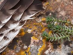Textures (calafellvalo) Tags: paisajes atardecer calafell gaviotas texturas cueva lestany elementos costadorada figurativo calafellvalo covaforadada castelldecalafell calafellpoble