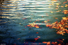Y decora las aguas de tu ro, con hojas de mi otoo enajenado (Ferny Carreras) Tags: light orange sun reflection luz sol water leaves yellow ro river hojas agua amarillo otoo naranja lorca reflejos atumn