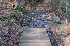 the board walk ends in a trail/stream Photo