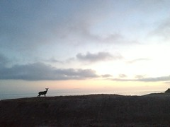 Deer (mockstar) Tags: sunset losangeles malibu deer davidpoe desanimaux