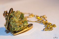 (nugsh0ts) Tags: macro green dusty gold necklace washington weed state crystal medical pot thc marijuana dank keif locket nug