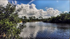Florida (robert (Bobby)powell) Tags: usa robert gulfofmexico nature water pinetree clouds canon reflections river landscape yahoo google flickr florida lee fl mangroves bing leecounty waterscape gulfcoast naturephotography southwestflorida ruralflorida leecountyfl esterofl flickriver leecountyflorida canonwater discoveryphotos flickrfromyahoo ruralfloridabeforethedevelopers pelicansoundcountryclub robertbobbypowell bingimagesofesteroflorida bingimagesofflorida imagesofflorida imiagesofesteroflorida bingimagesofleecountyflorida