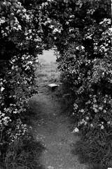 desires held for a secret garden (still~positive) Tags: film mju secret gap olympus passage