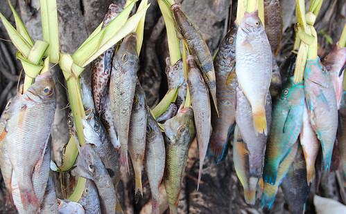 Locally caught reef fish at a roadside stall in Dili, Timor-Leste. Photo by Holly Holmes, 2013