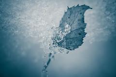 Ice sheet (Patr