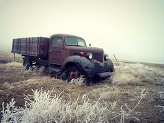 1939 Dodge grain truck (dave_7) Tags: old classic truck rust grain rusty dodge 1939