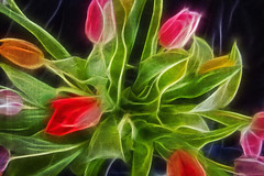 Tulips (Bozze) Tags: tulips wwwoppnahorisonterse