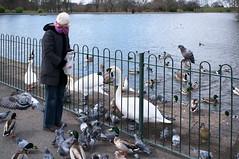 Duck Feeding (kh1234567890) Tags: lake pond pentax pigeons ducks swans streetphoto plattfields k7 da21 smcpda21mmf32al 21mmlimited smcpentaxda21mmf32allimited