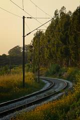 SA1 de Amieira (Tiago Alves Miranda) Tags: portugal track railway via caution signal sinal distant linha signalling sinalizao ferroviria caminhodeferro avanado precauo linhadooeste bicanho tiagoalvesmiranda