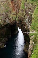Bullers of Buchan (tommyajohansson) Tags: greatbritain geotagged scotland aberdeenshire unitedkingdom aberdeen seabirds weekendbreak citybreak bullersofbuchan tommyajohansson