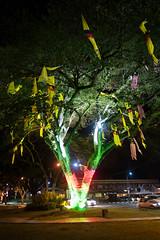 Patriotic tree (quinet) Tags: tree lights sarawak malaysia borneo arbre baum kuching beleuchtung lumires 2015