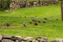 7K8A3832 (rpealit) Tags: scenery wildlife nature east hatchery alumni field hackettstown