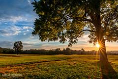 Sunset Peekaboo (jcernstphoto) Tags: sunset tree virginia civilwar manassas starburst manassasbattlefield