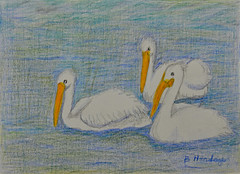 Trio of White Pelicans (BKHagar *Kim*) Tags: bkhagar moms art artwork drawing scribble color pencil pencils bettyhardage artist