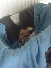 Mon, Aug 22nd, 2016 Found Female Dog - Mallow, Ironmines, Cork (Lost and Found Pets Ireland) Tags: founddogmallowcork found dog mallow cork august 2016