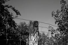 Zaun (tom-schulz) Tags: fence zaun biotar