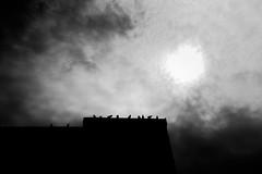 waiting. (jonathancastellino) Tags: toronto architecture sit sitting bird birds project projects sky sun line row perch leica m summicron regentpark