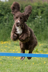 Dog Photography by Gerry Slade-1110 (Photography By Gerry Slade) Tags: dogphotographer gerryslade wwwgerrysladecouk
