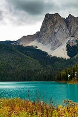 Emerald Lake (poormommy) Tags: mountain mountainlake lake water emeraldlake yohonationalpark britishcolumbia trees