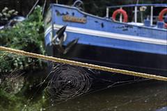 Une trs longue escale (chando*) Tags: amarre barge bateau boat canal mooringline pniche ronquires spiderweb toiledaraigne