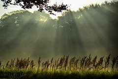 sunrays in the countryside (Neal J.Wilson) Tags: nature trees early morning silhouette rays sunrays sunbeams beams landscapes jutland denmark europe reeds moods nikon d3200