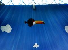 tucano (BENET - BNT) Tags: graffiti infantil escola spray bnt benet art arte custom work paint pintura