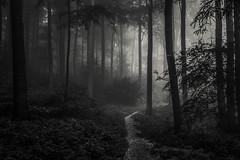 * (sedregh (on/off)) Tags: nebel fog mist wald forest woods eifel sw landschaft landscape hilberath