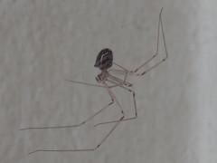 DSC06308 (familiapratta) Tags: sony dschx100v hx100v iso100 natureza inseto insetos nature insect insects