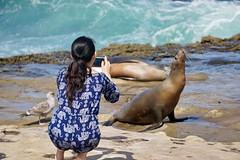 La Jolla Photography ((Jessica)) Tags: people wildlife beach marinemammals lajolla sandiego seal humans nature california crowd lajollacove sealion tourists ocean
