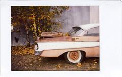Edsel (R. Drozda) Tags: fairbanks alaska car edsel ford tree birch corrugatedmetal autumn fall leaves drozda