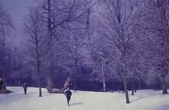 dutch winter (19) (bertknot) Tags: winter dutchwinter dewinter winterinholland winterinthenetherlands hollandsewinter winterinnederlanddutchwinter
