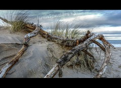 39/365 - A Sticky Situation (Highland Art 13) Tags: beach driftwood moray lossiemouth morayshire lossie project365 365project