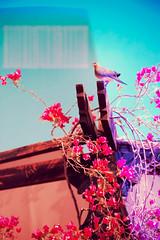 Egypt II (Erica Gilbertson) Tags: pink flowers blue light sky baby sun flower tree cute bird nature beautiful up sunshine animal bar canon daylight fly flying heaven day purple egypt bluesky 5d vaccation beautifulnature canoneos5dmarkii 5dmarkii canon5dmarkii