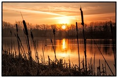 Tranquility (ANDYMCimages) Tags: lake sunrise reflections reeds golden pond ducks rushes flickraward