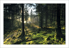 Shadowlands, Loch Ard Forest, Trossachs (SwaloPhoto) Tags: trees mist scotland nationalpark lyrics moss path forestry availablelight album bosque rush trunks lochlomond forestpark ze queenelizabeth stirlingshire 2014 hemispheres lochard forestrycommission shortlisted lochardforest canoneos5dmkii distagont2821 distagon2128ze opoty andtrossachs