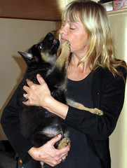 Heidi and baby Rooney.. (faster2007) Tags: denmark germansheperd babyrooney heidiandpuppy